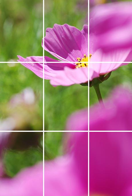 image d'une fleur pour le principe des tiers
